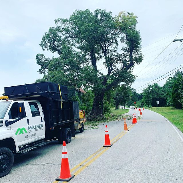 Anyone in Southern Calvert recognize this Oak Tree? Big Oak at Red Oak Liquors on Sollers Wharf Rd is coming down today. Be cautious and give us a wave if you drive by. MD Licensed Tree Expert # 2149. Licensed and Insured.