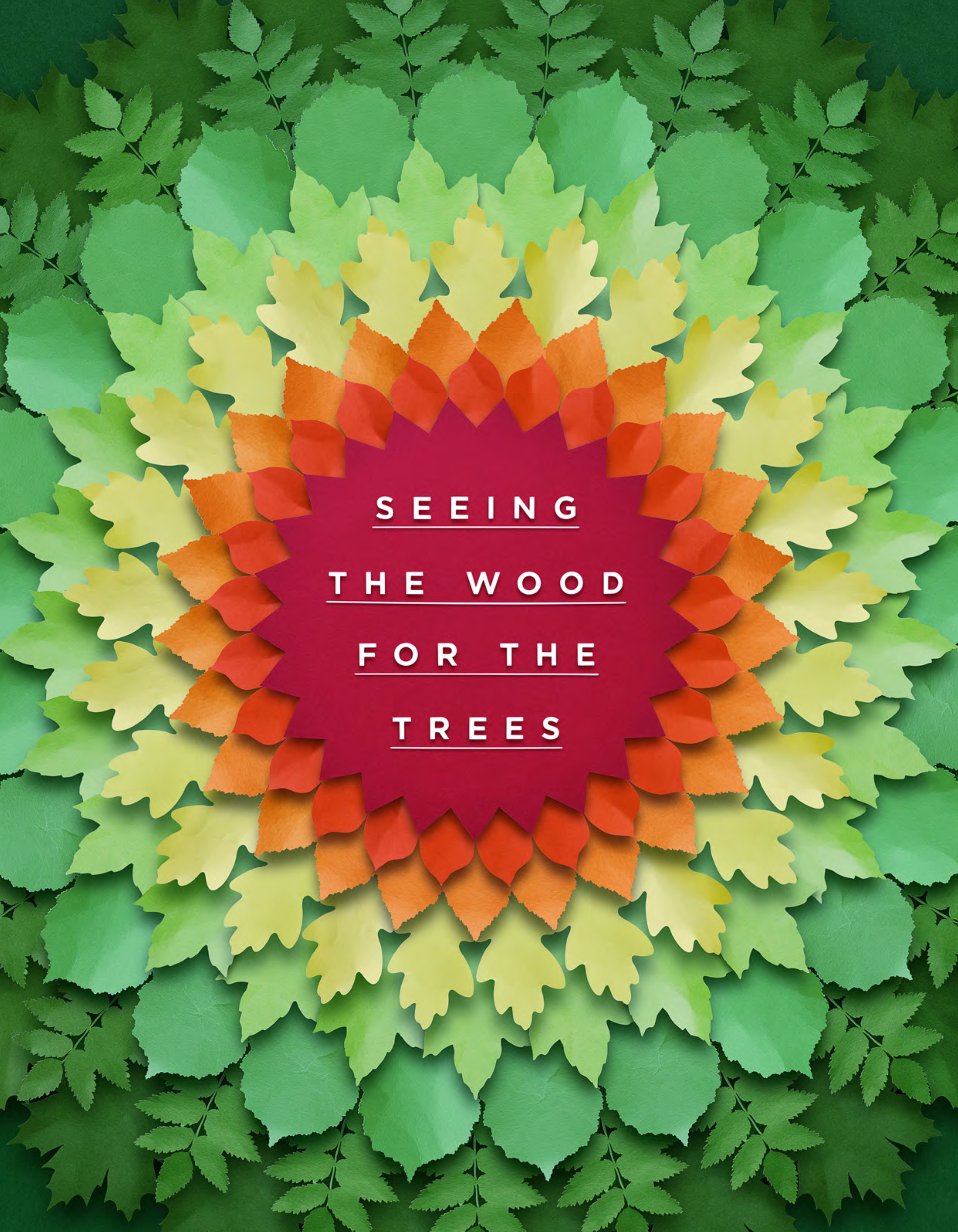 Seeing The Wood For The Trees  for Land Business Spring/Summer 2018