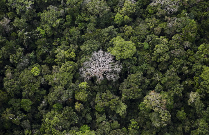 NACHO DOCE / REUTERS An aerial view of the Amazon Rainforest at the Bom Futuro National Forest in Port Velho, Brazil.
