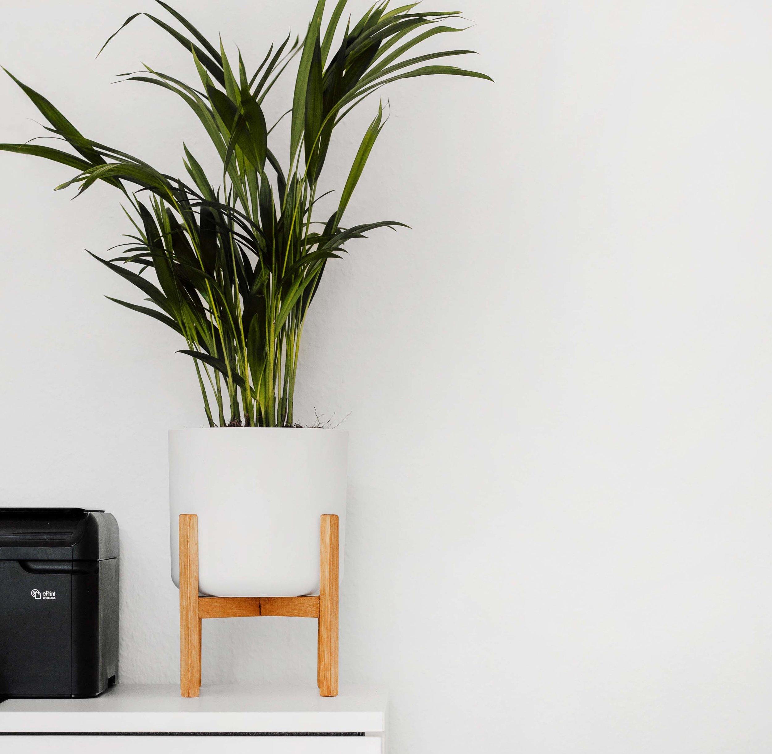 ASSESSORAMENT - Aquest és el servei que necessites si el que vols és dotar d'un aire diferent el teu habitatge sense necessitat d'obres. Nosaltres t'aportem les idees i una bona dosis de bon gust per ressaltar els punts forts de casa teva a través del mobiliari, la il·luminació, els colors, les textures i els materials que més s'adaptin al teu estil.