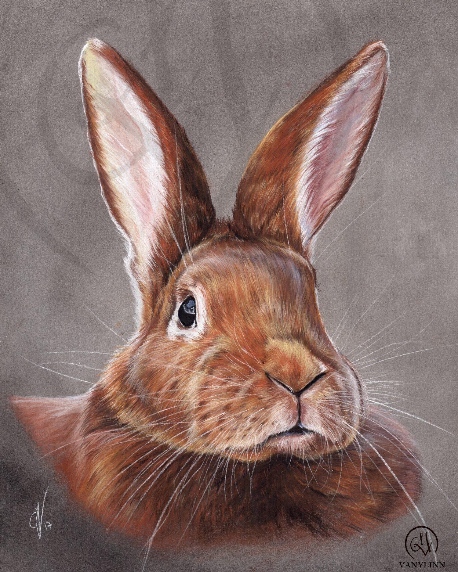 Loupiotte rabbit pet pastel hyper realistic.jpg