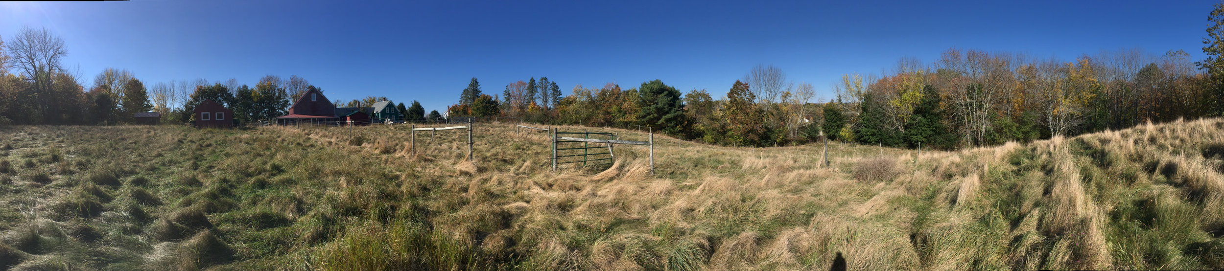 The overgrown fields before we began building the gardens.
