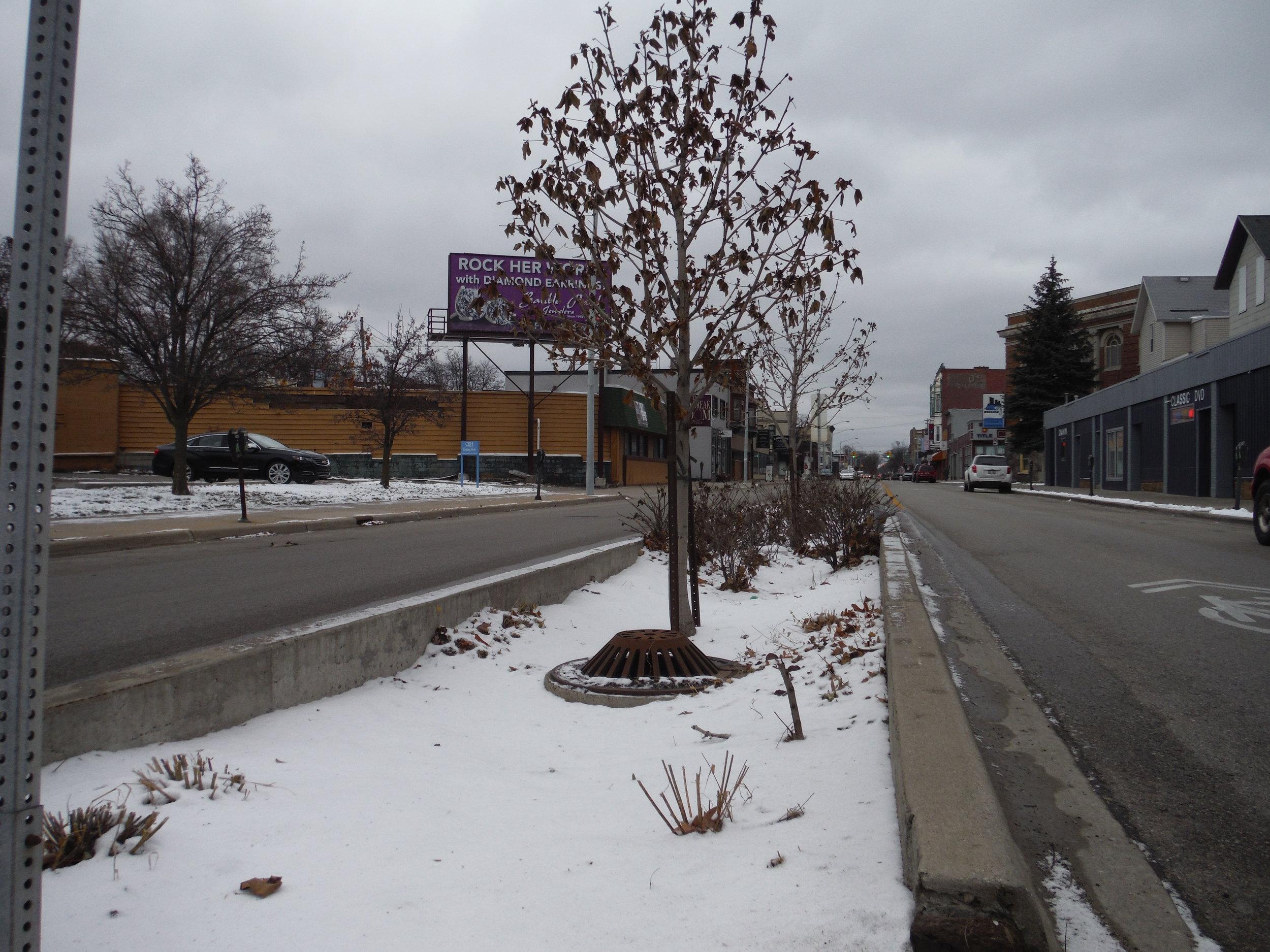 A bioswale in the median of Plainfield Avenue.