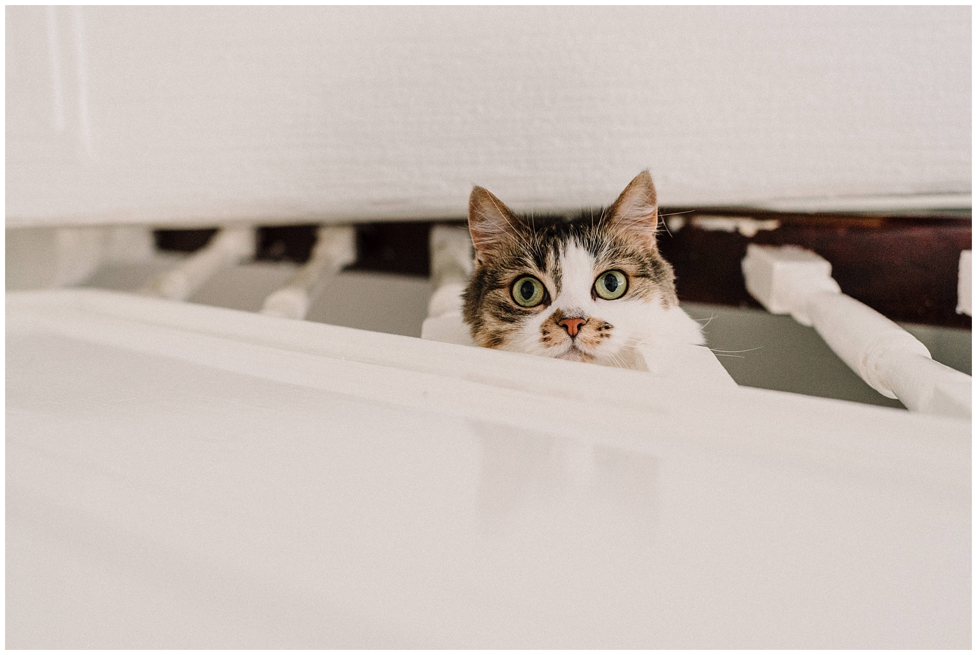 a cat looking through a bannister.jpg