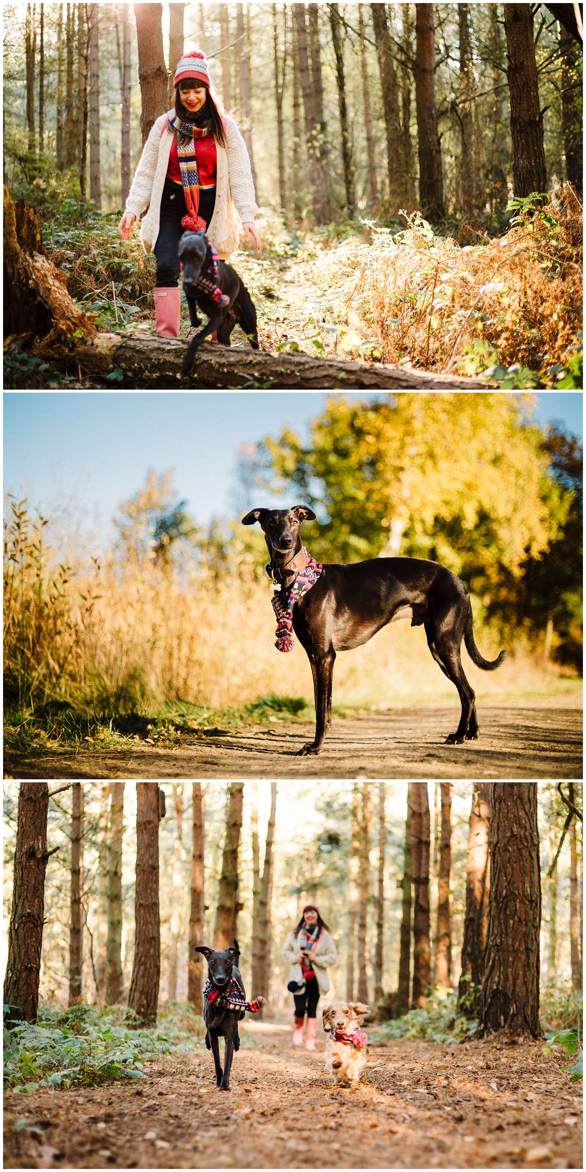 portraits of a long haired daschund and a whippet with their owner in the woods