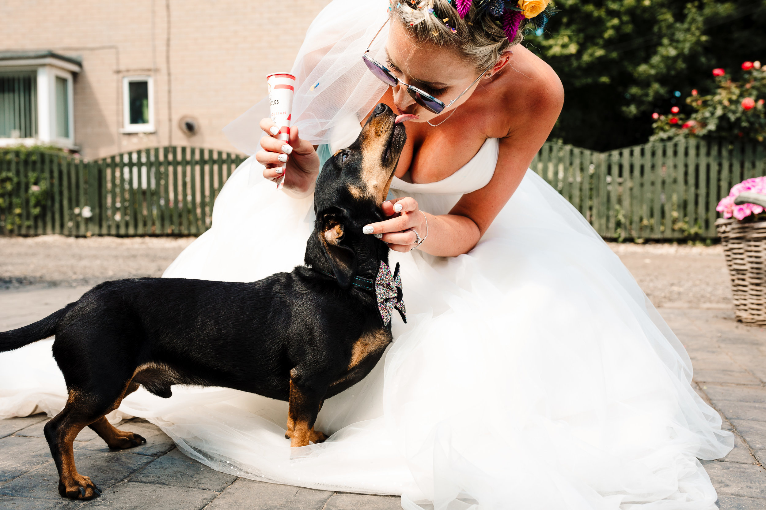A bride eating an ice lolly and getting kisses from her dog