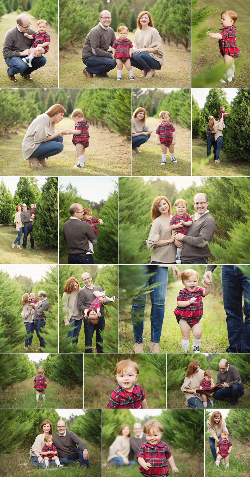 blog_tree farm.jpg