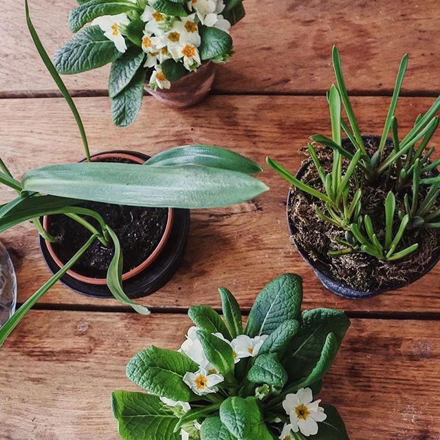 Haiii Spring 👋🏼 . Photo by @franbish . . #allthegreens #springhassprung #springinlondon #finejewellery #ukjewellery #jewellerydesign #newbrands #emeraldgreen #hoopandrose #springplants #dafodils