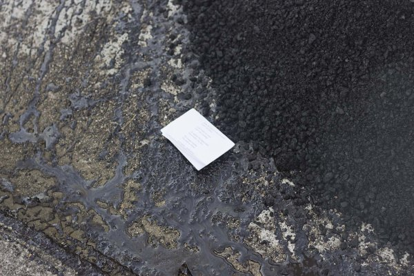Poem seed and asphalt. Photo by Laurencia Strauss