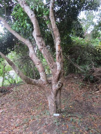 Bob-Desautels-Locavores-Digest-Grenada-1.jpg