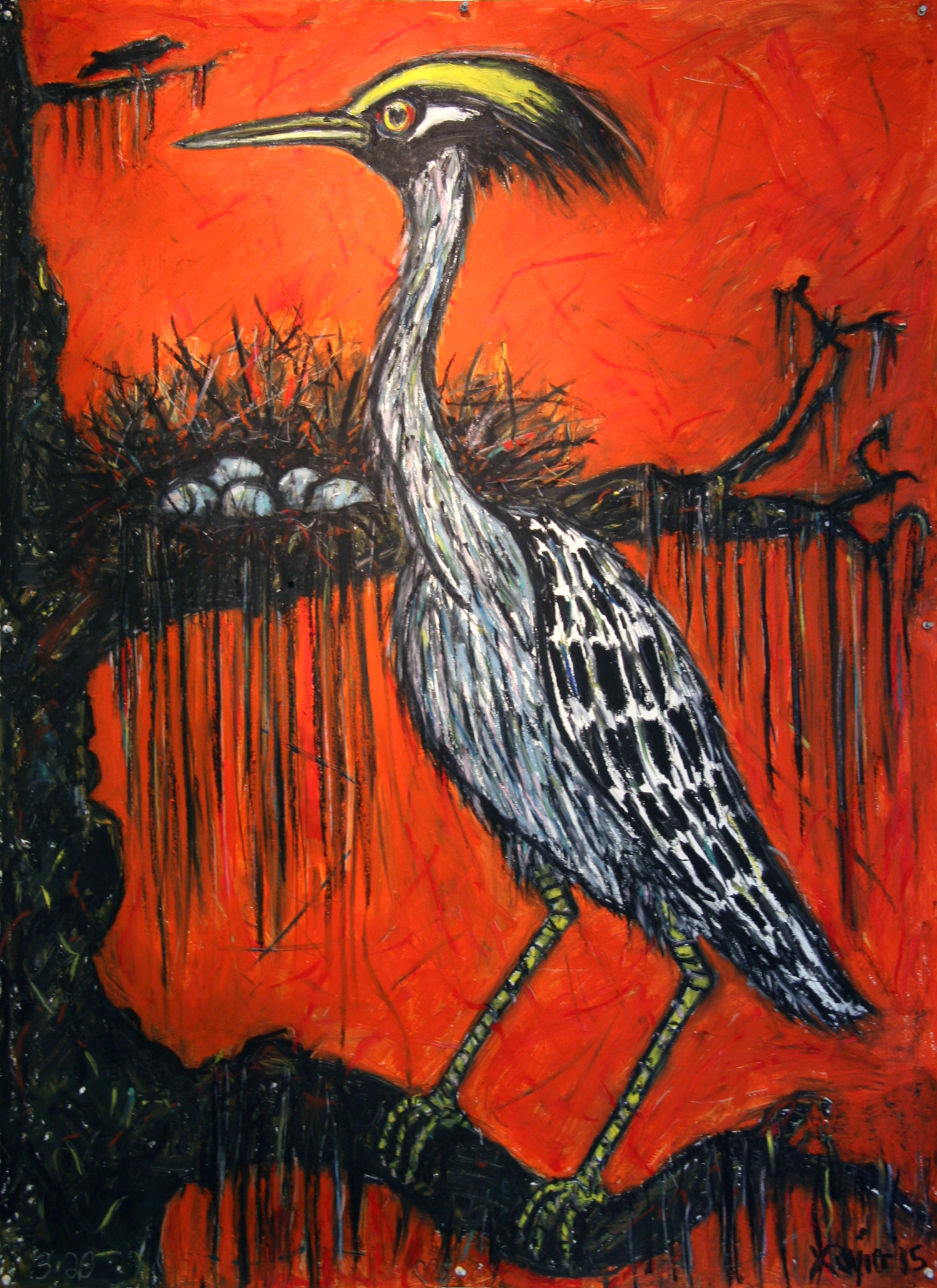 Yellow Crowned Heron