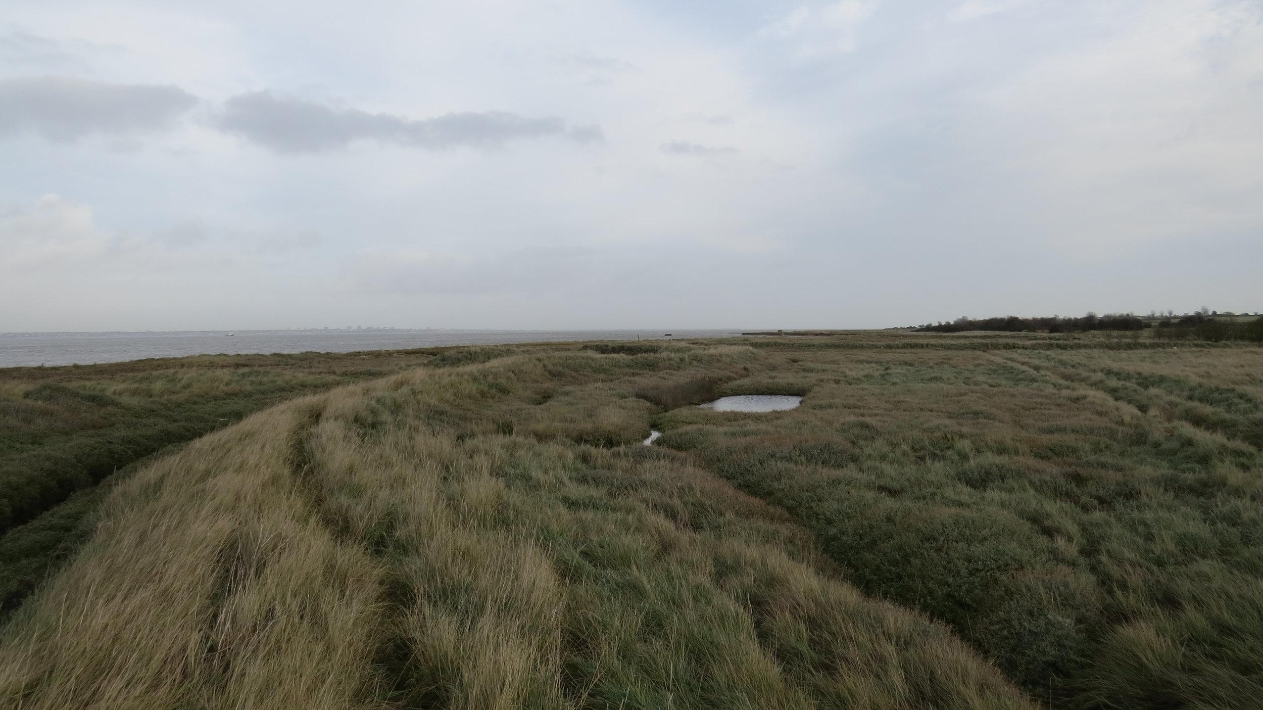 Marsh walking
