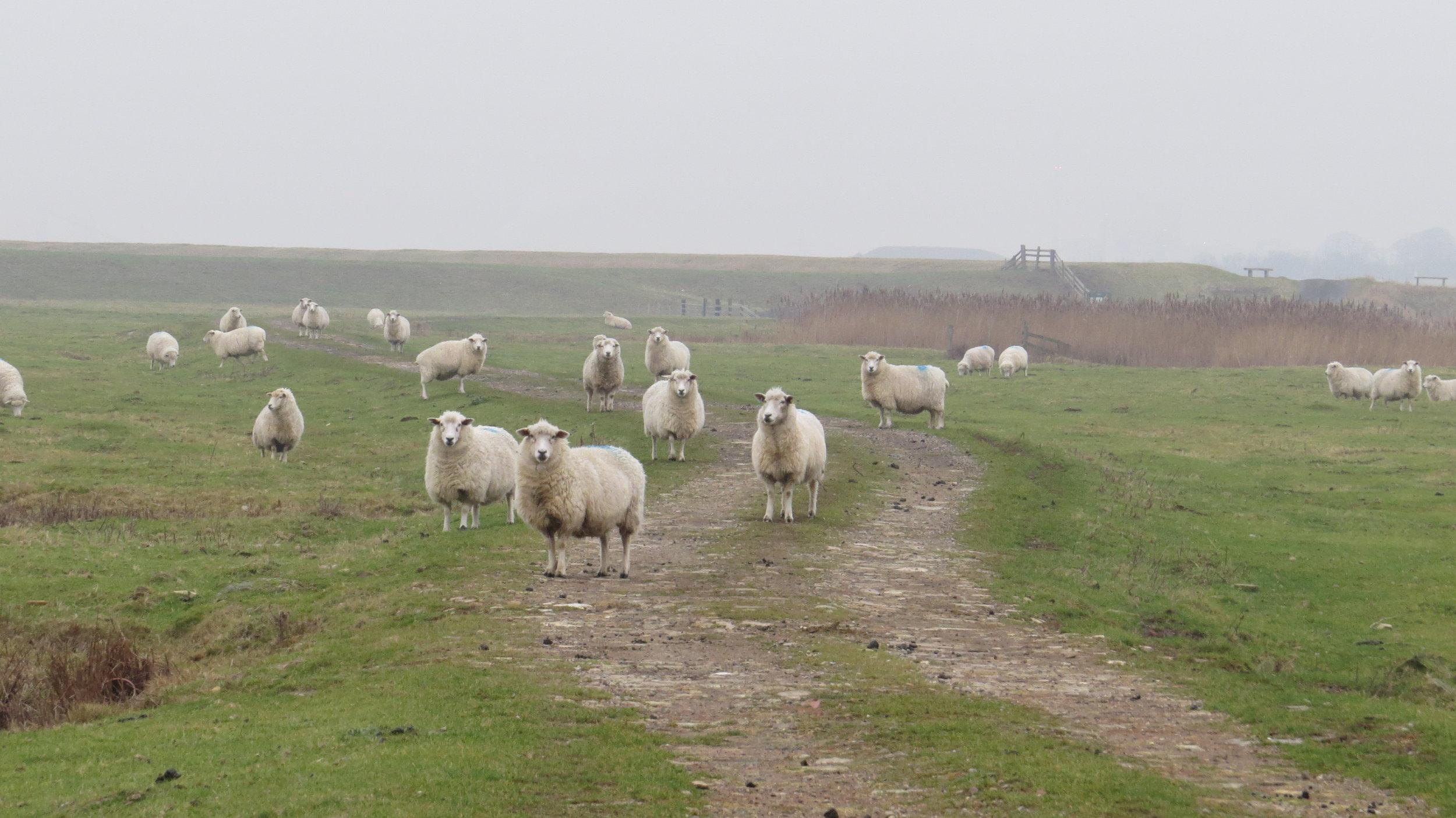 Hello to ewe