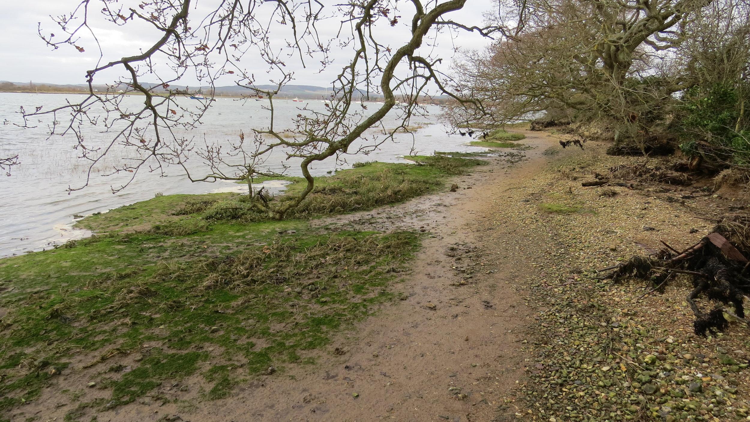 Tide Approaching