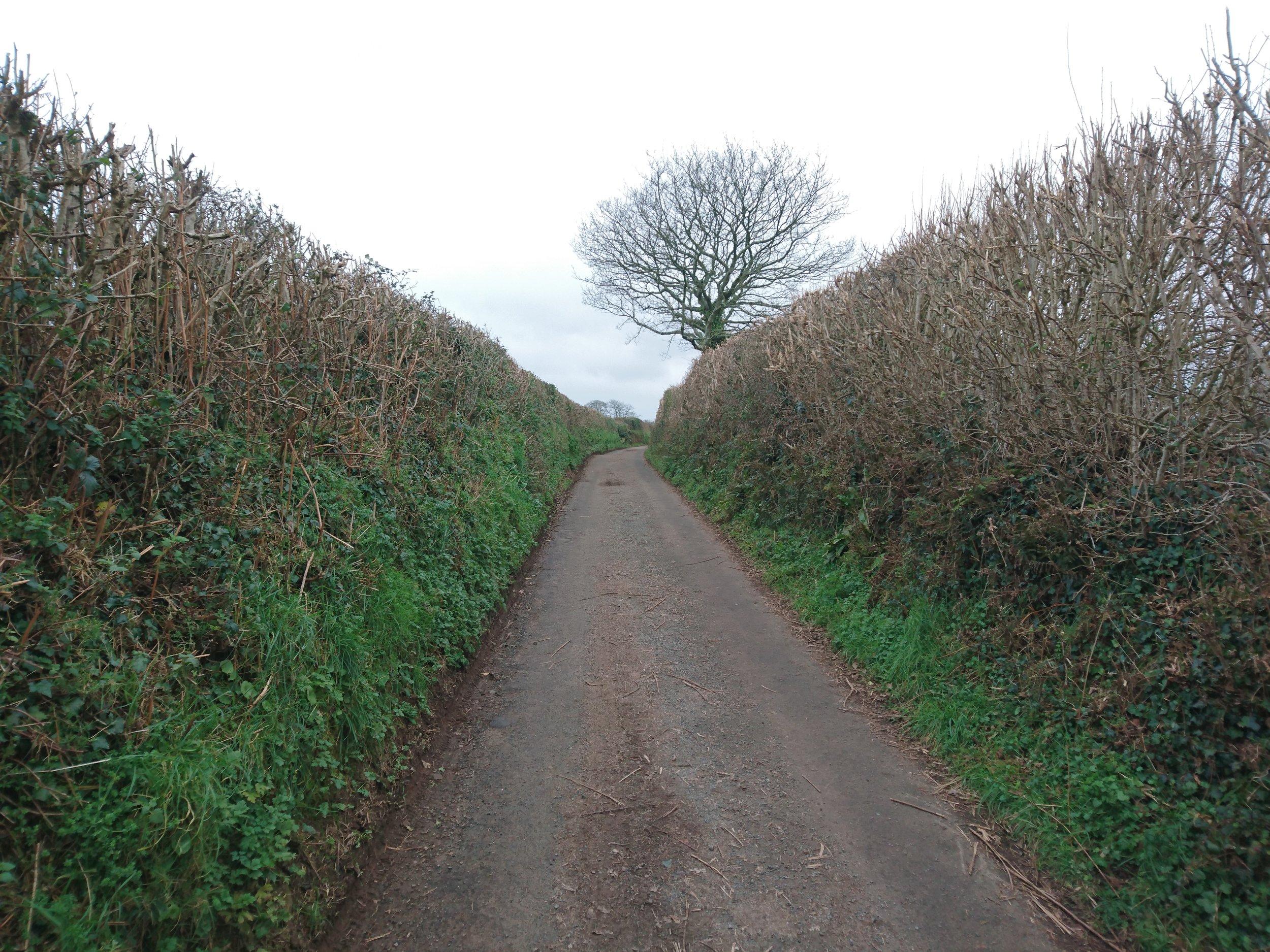 Lane Walking
