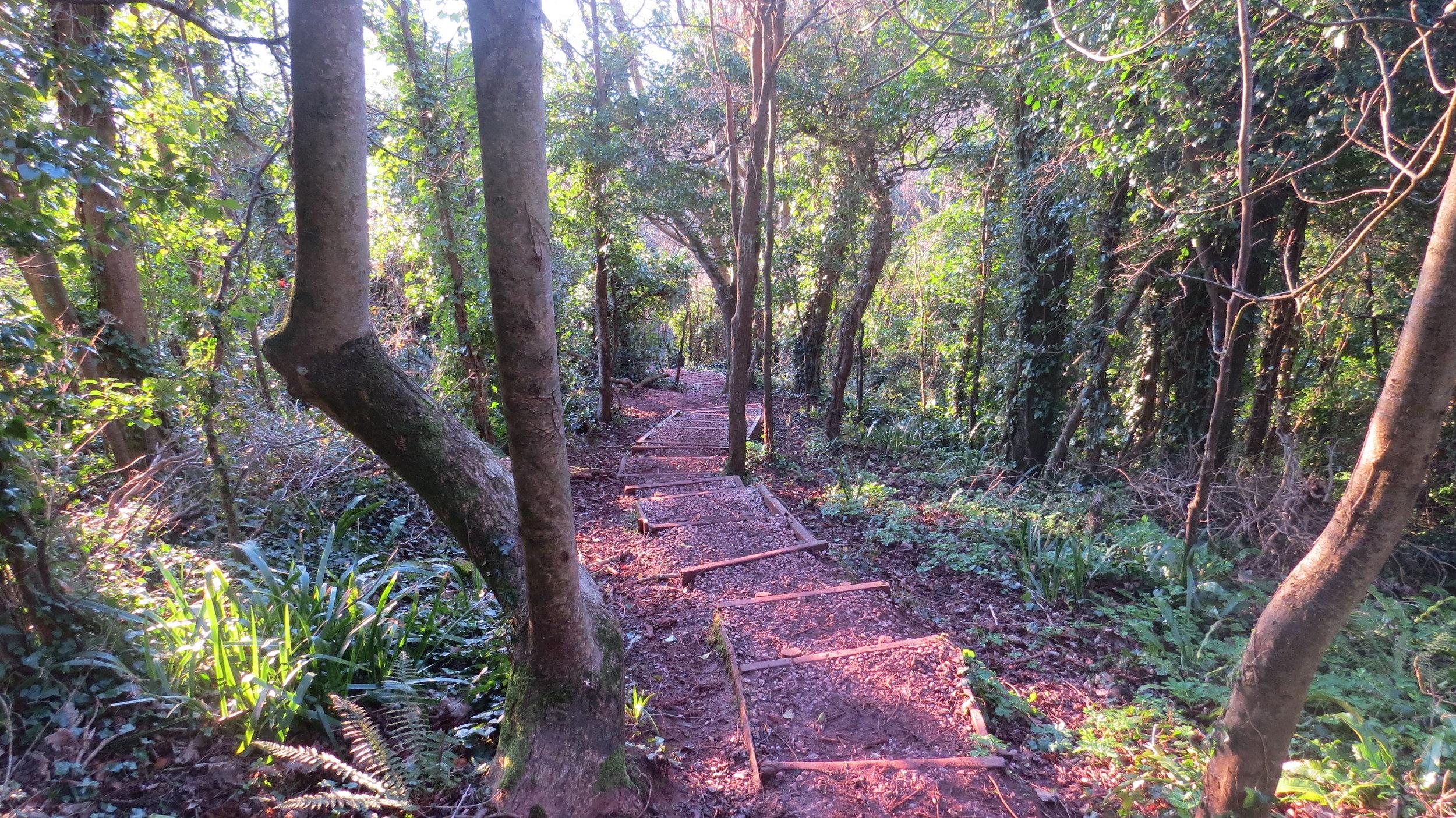 Steps through Woodland