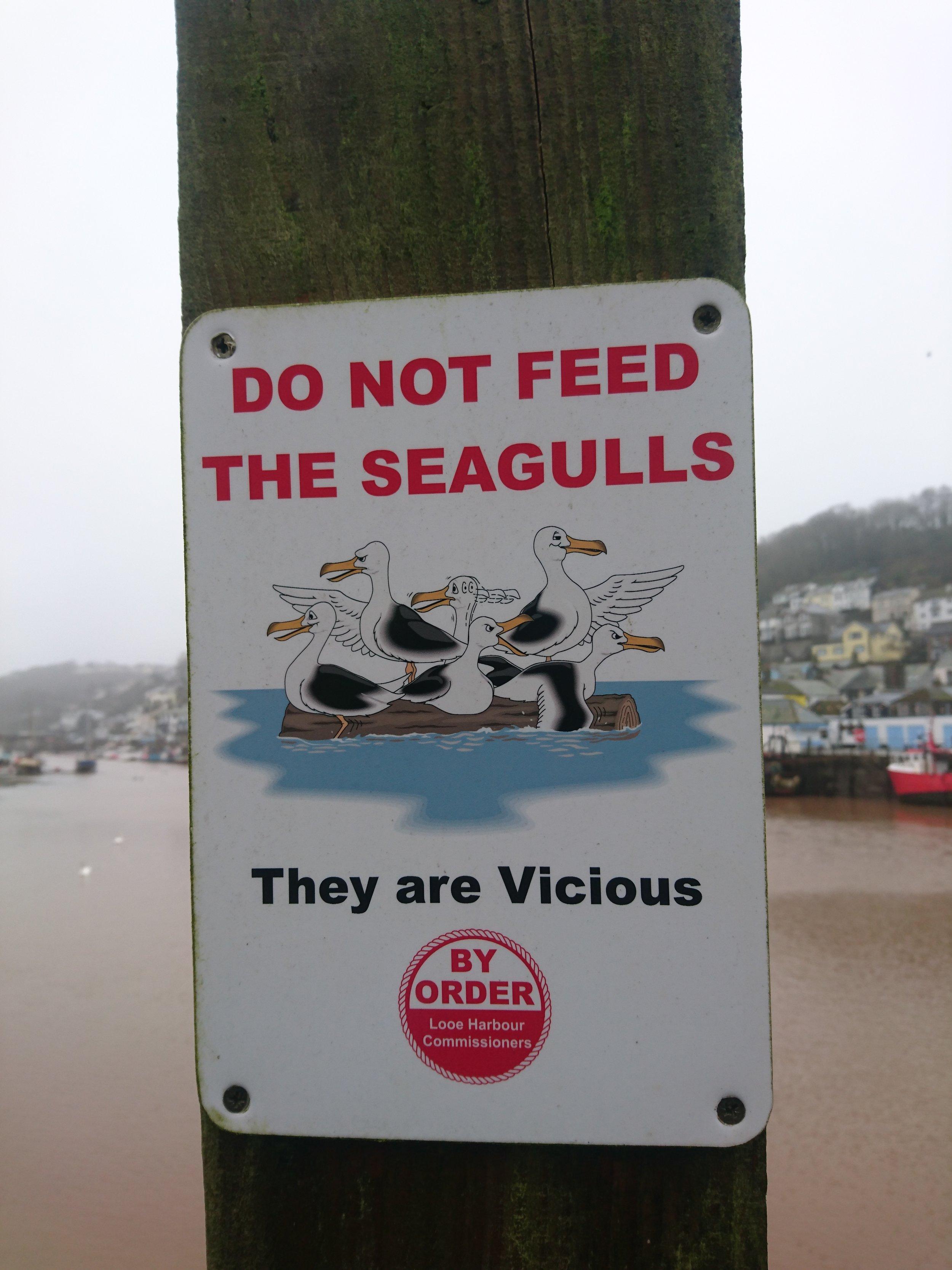 Beware Seagulls