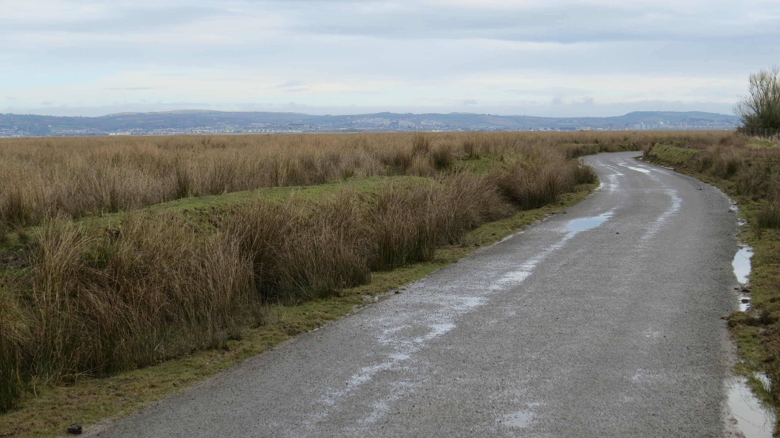 Road through Marshes