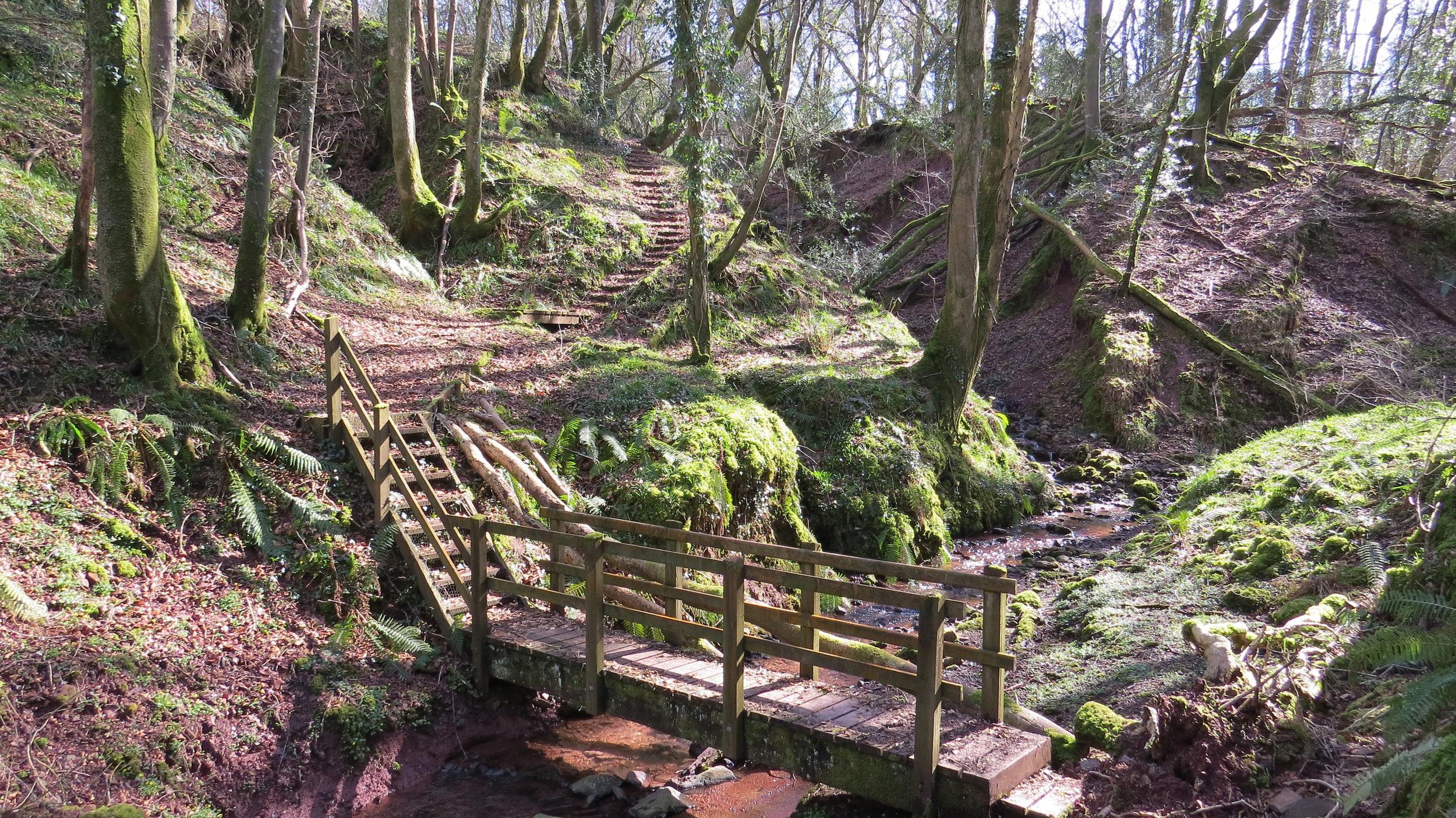 Woodland Walking