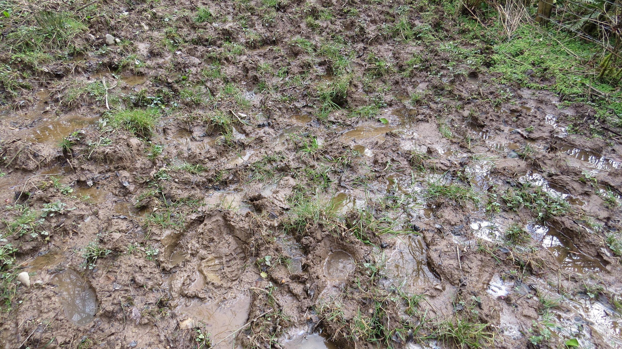 Return of the Mud