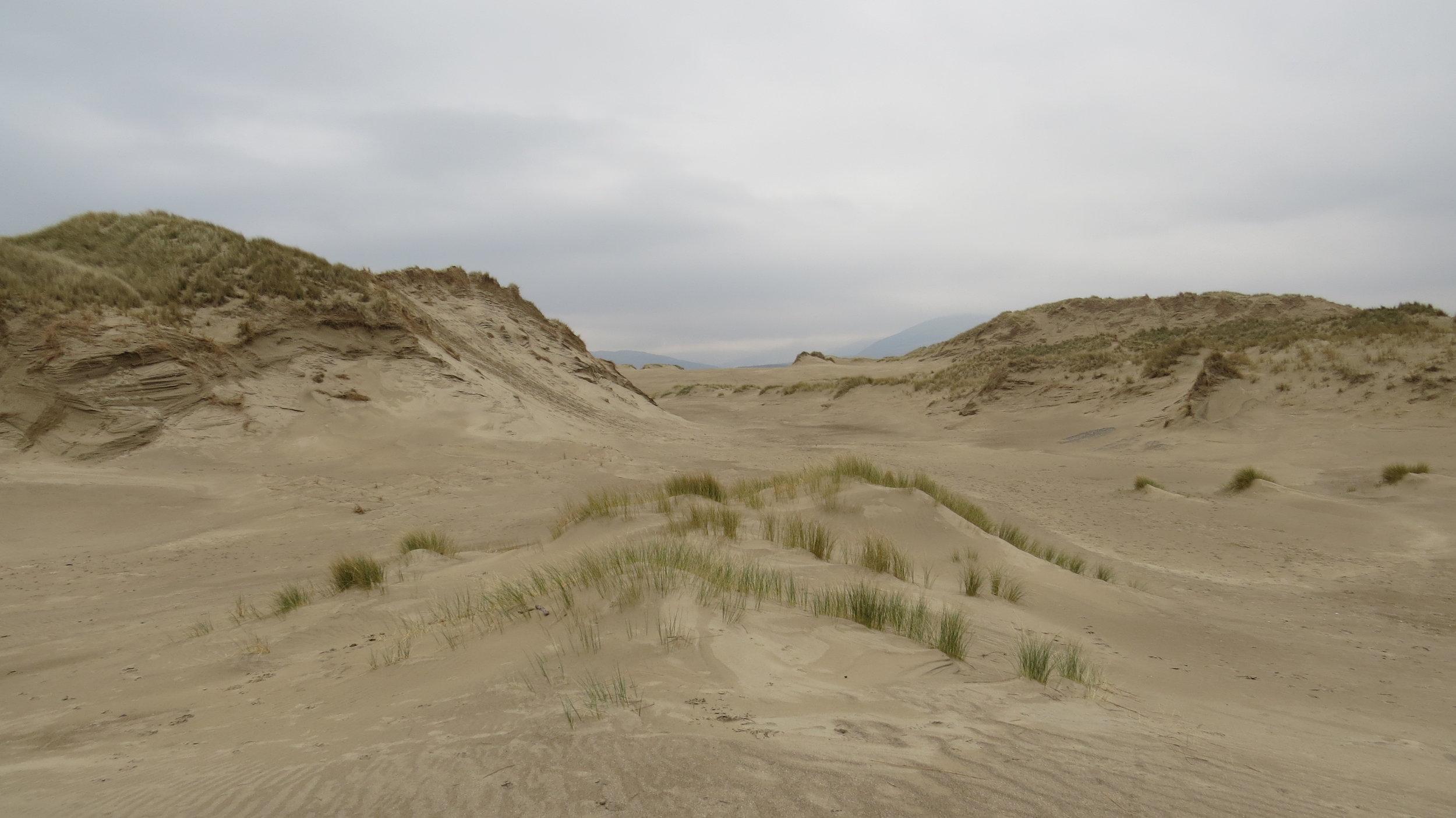 Dunes near Shell Island