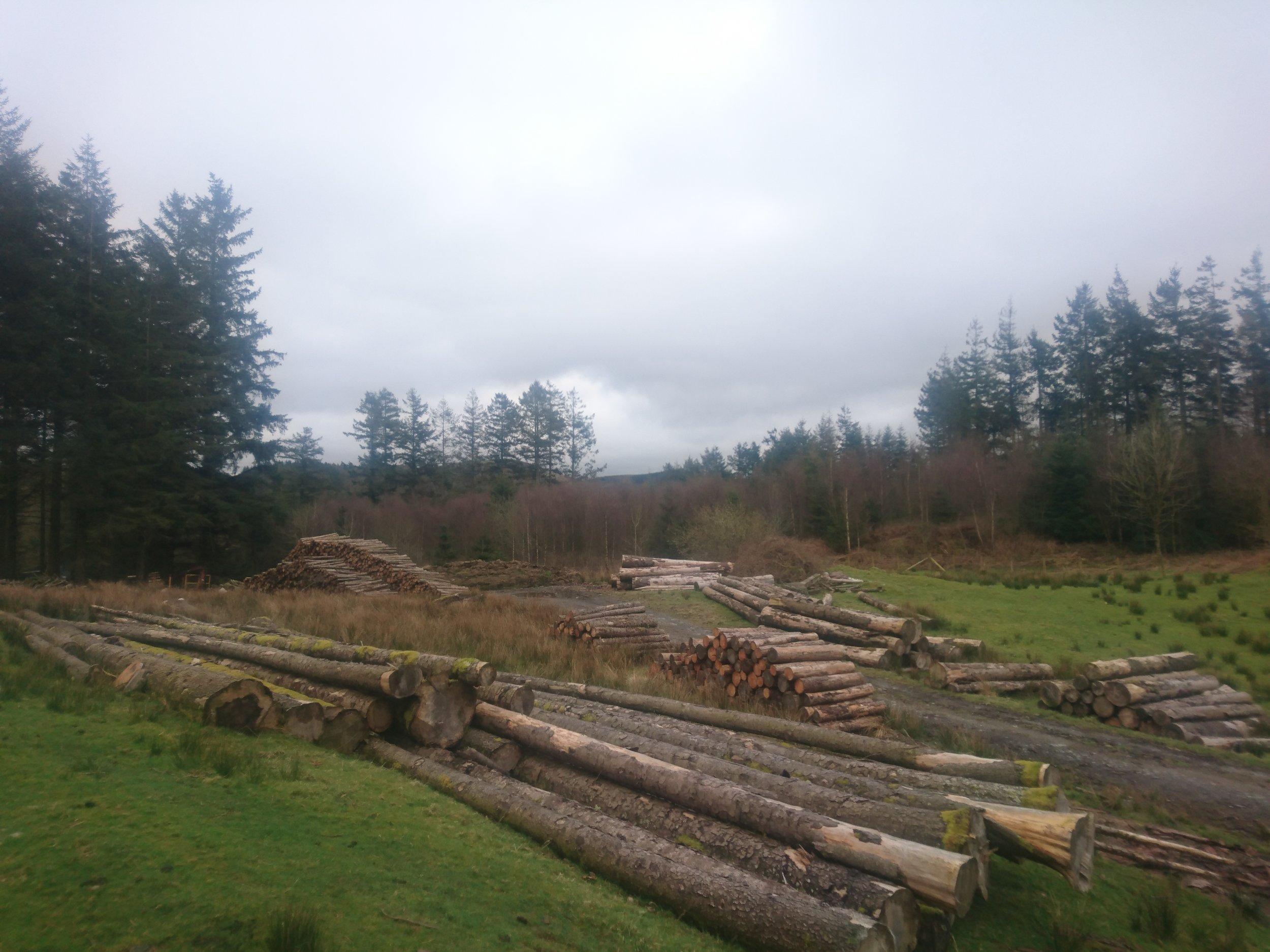 Timber in Yard