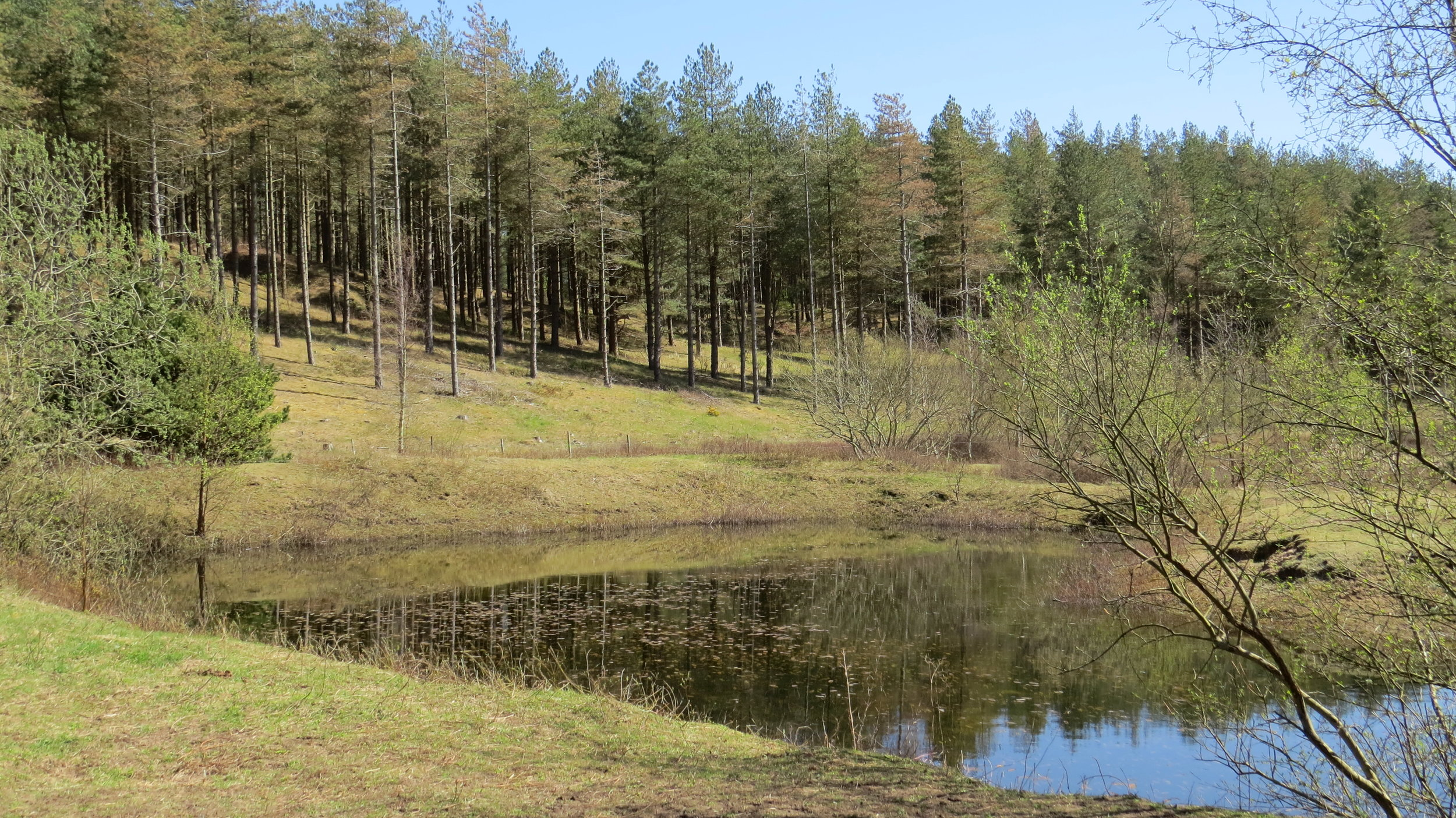 Newborough Forest Reflection