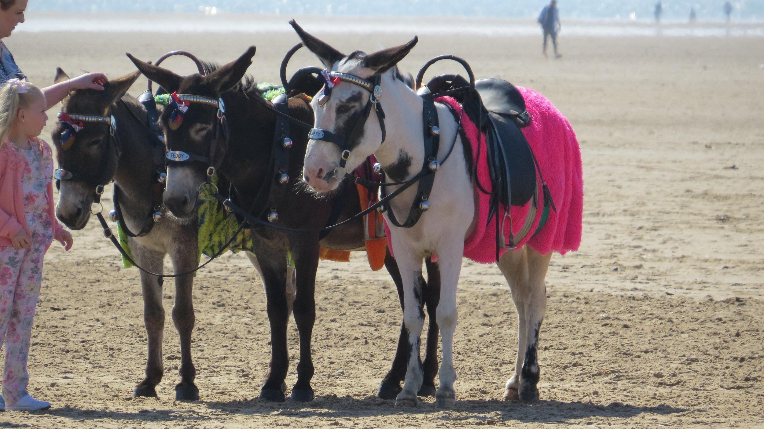 Blackpool (well St Anne's) Donkeys