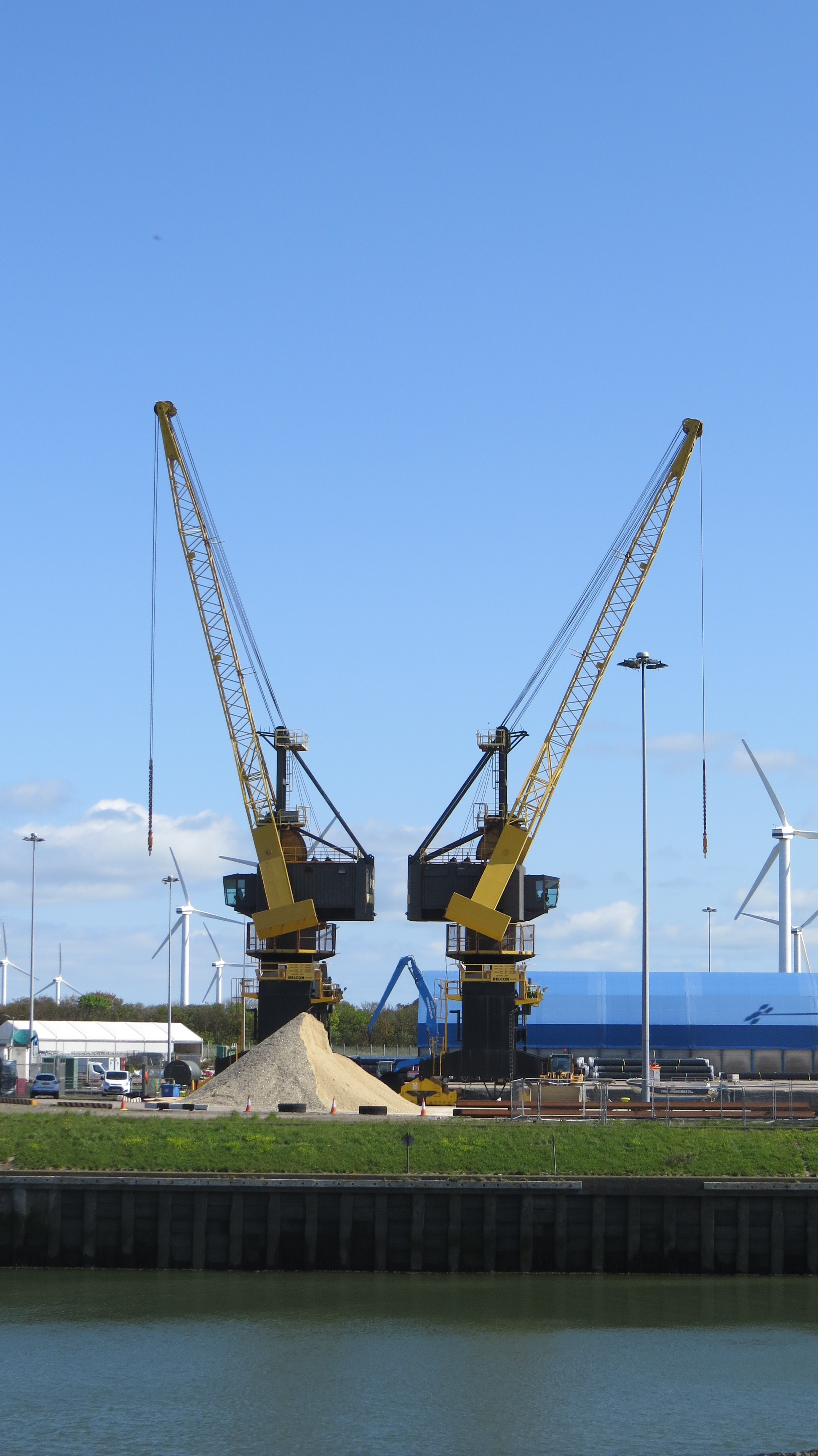 Two Yellow Cranes