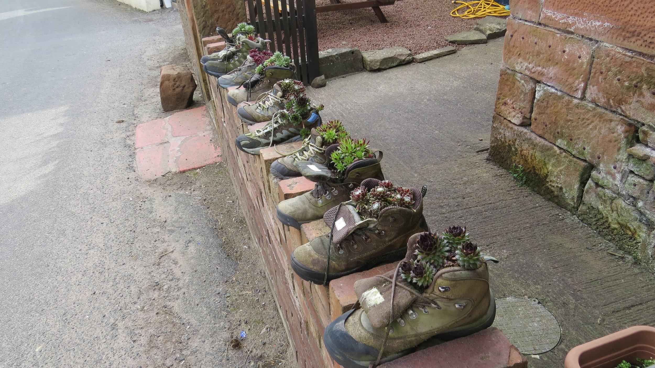 Succulent Shoes