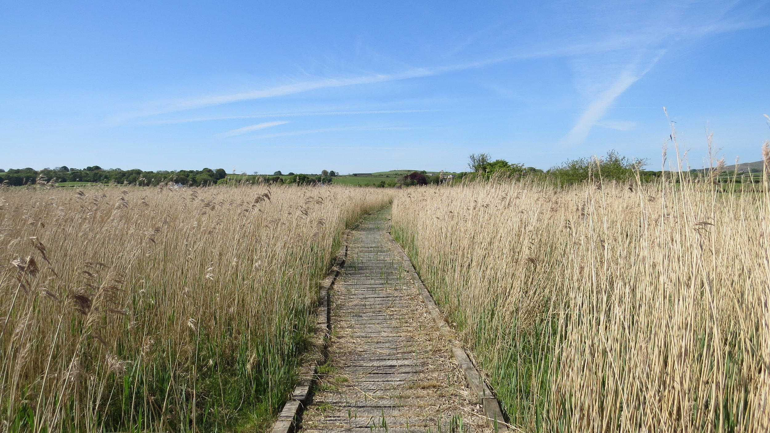Boardwalk through the Reeds