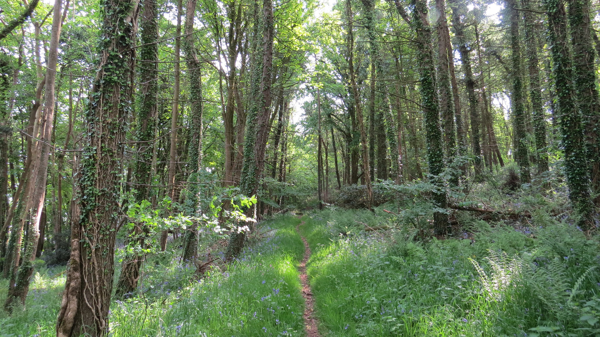 Shore Wood Belts