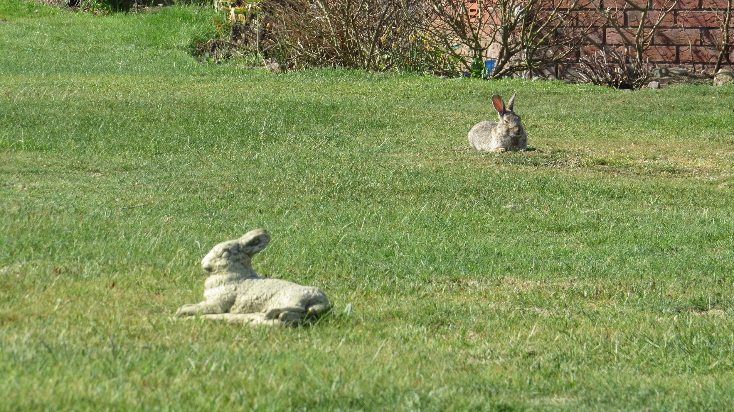 Rabbit Statue & Real Rabbit