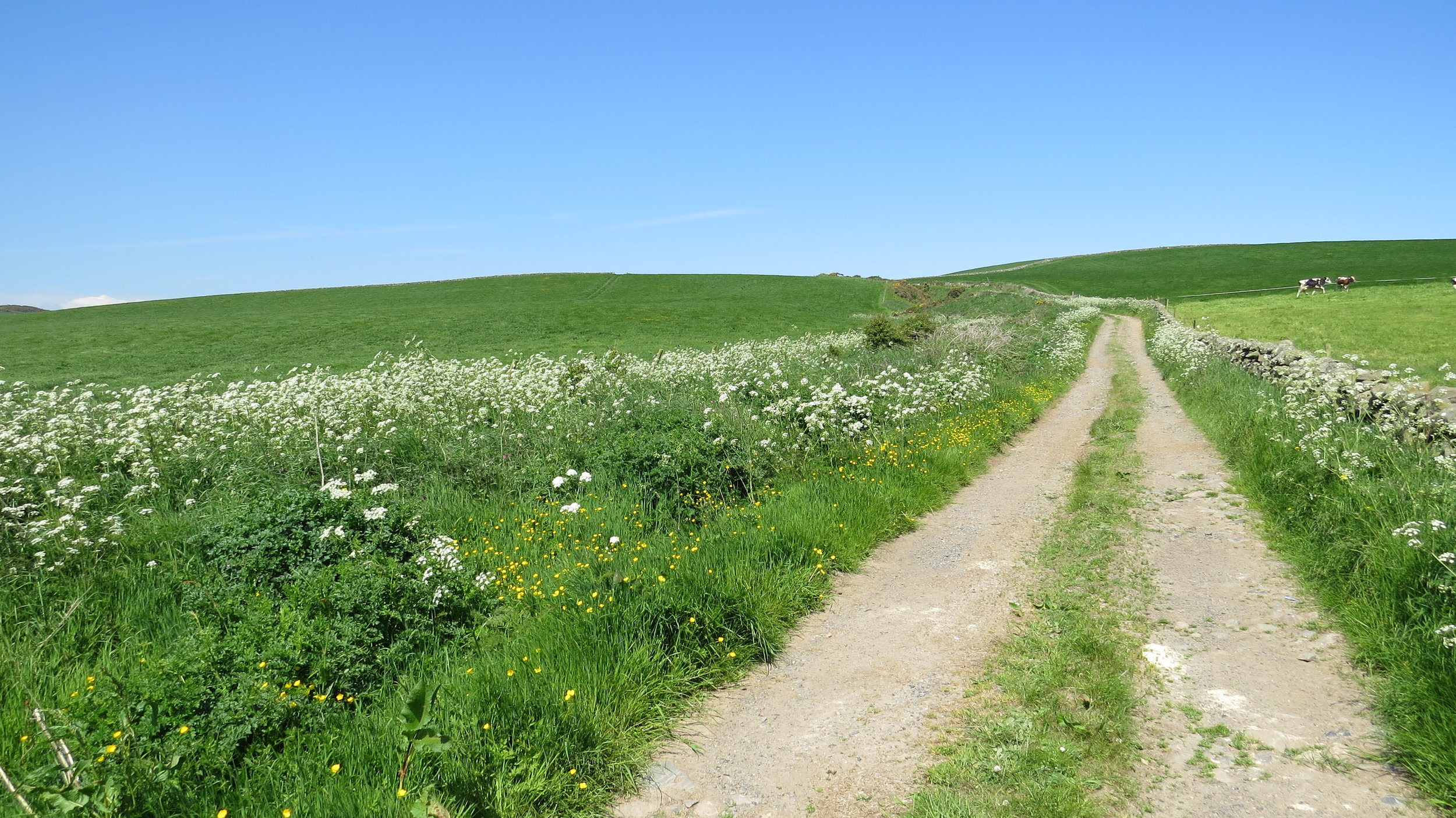 Track Walking