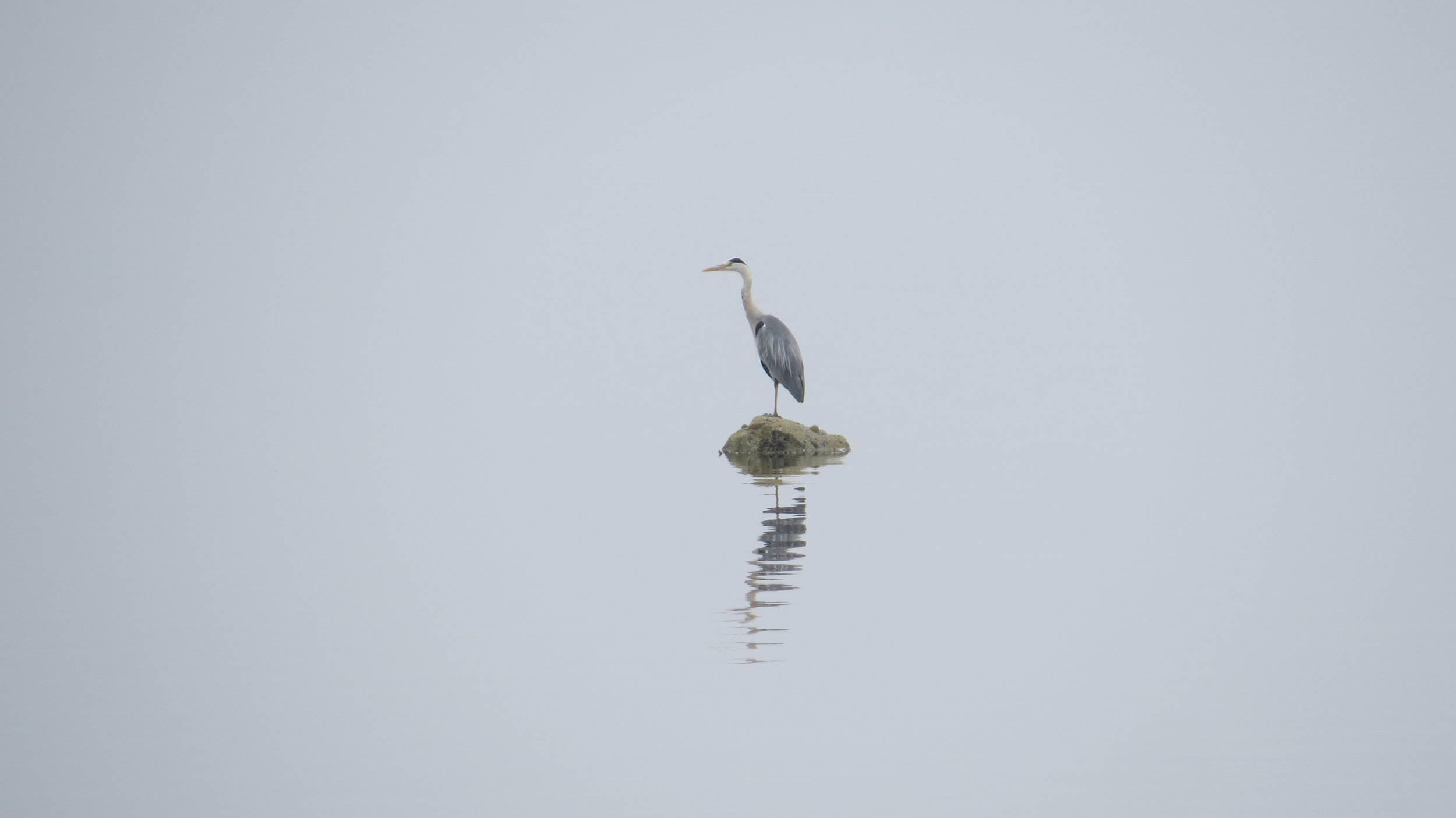 Heron & Reflection