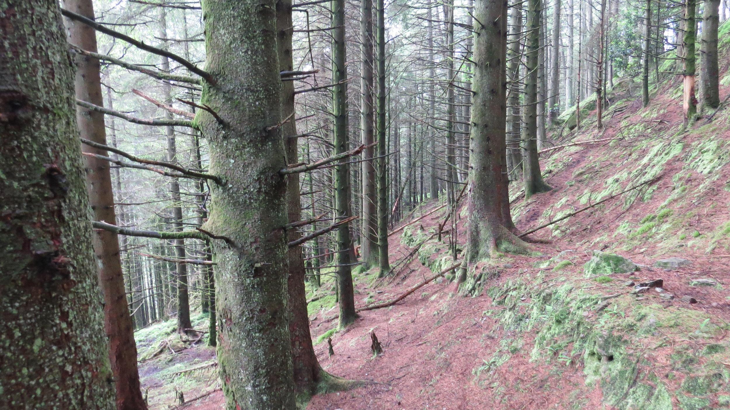 Easy Part of Wood Walking