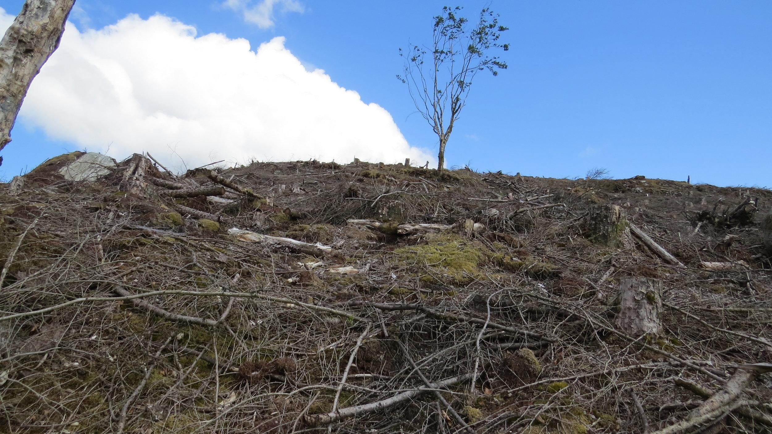 Route through Felled Trees