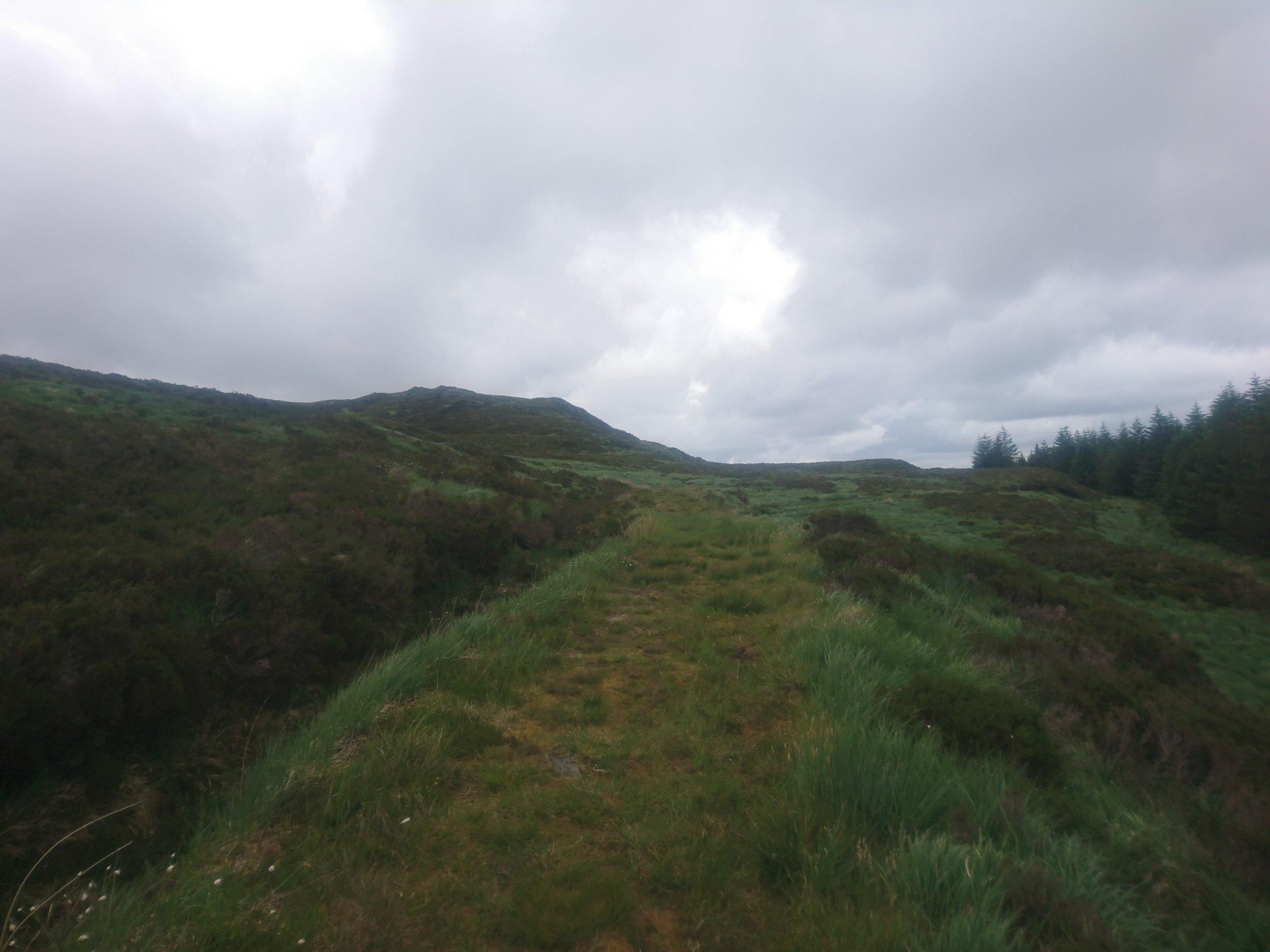 Path through the Moor
