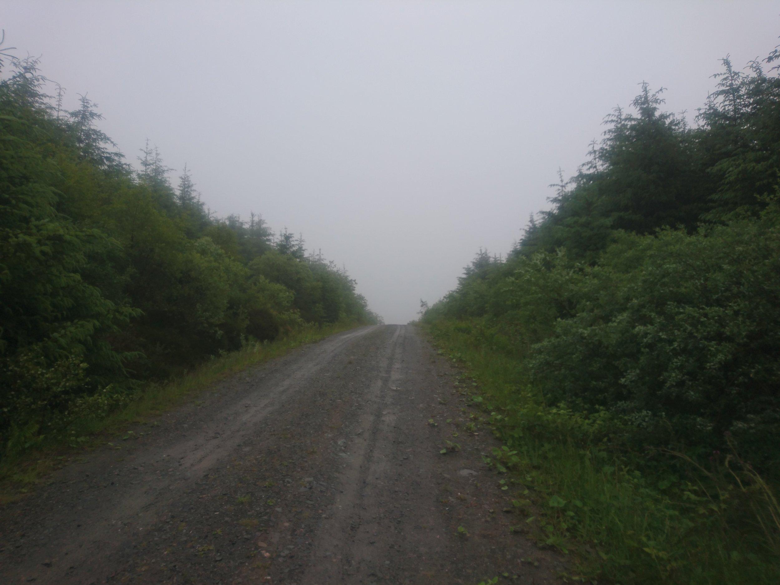 Damp Track through Forest