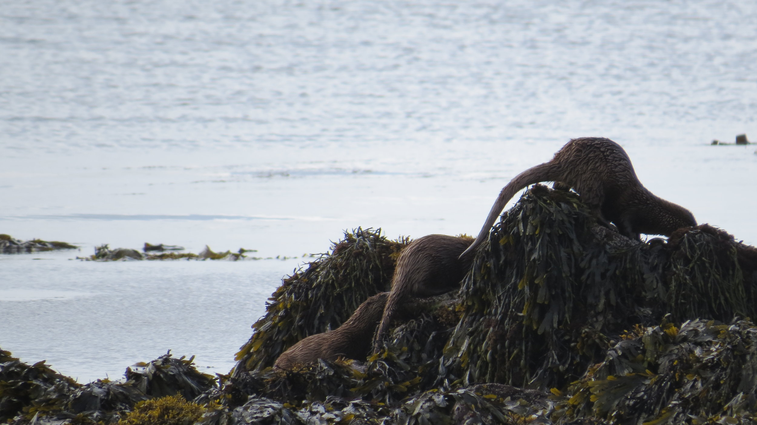 Otter Queue