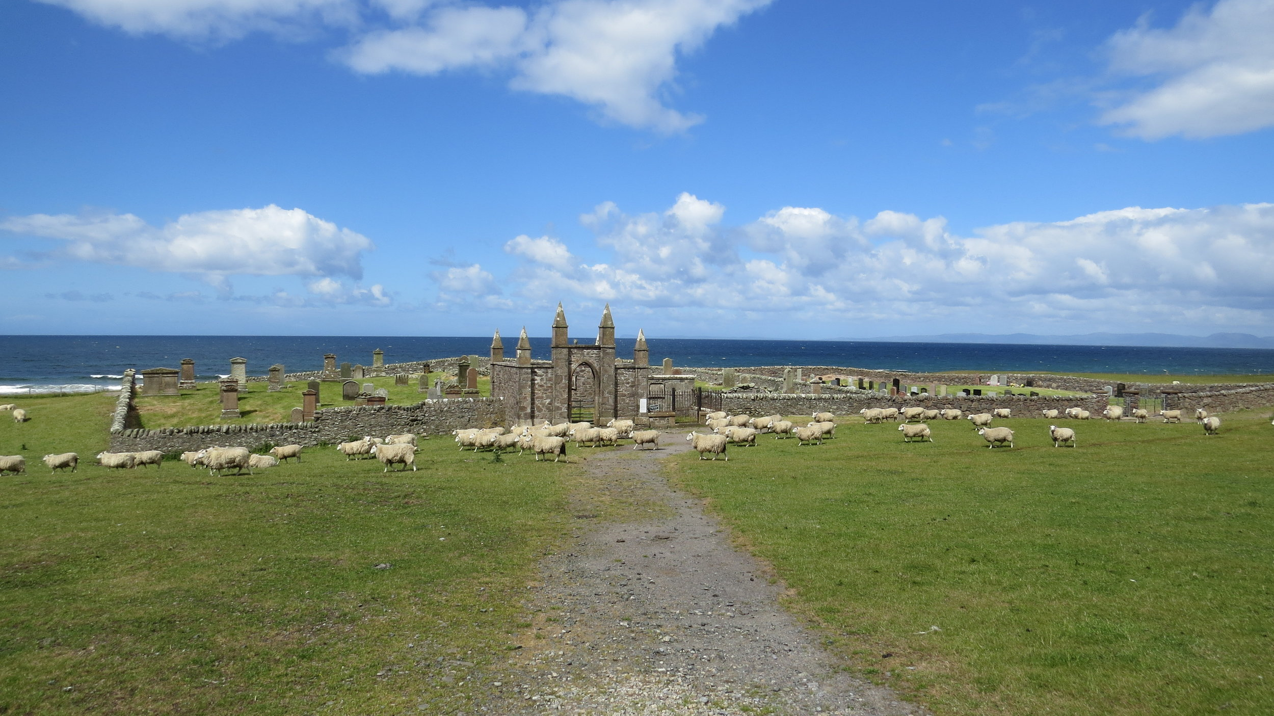 Sheep and Cemetry