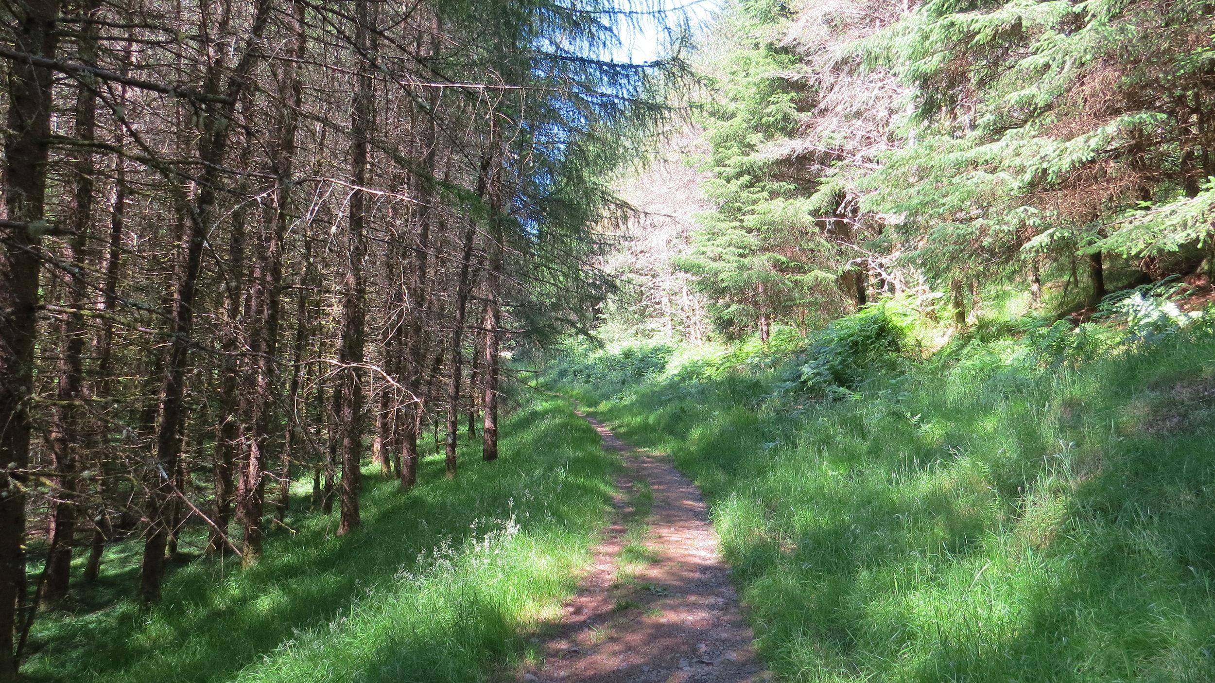 Track through Cologin Wood