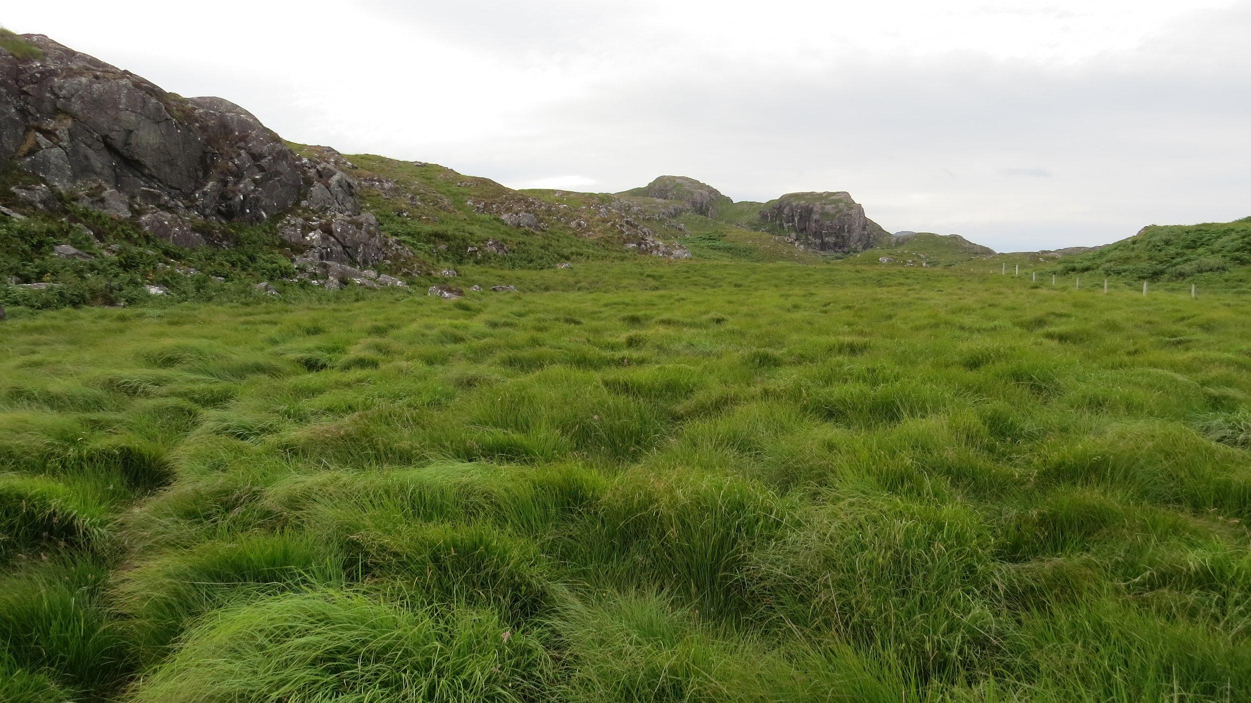 Lumpy Grass Walking