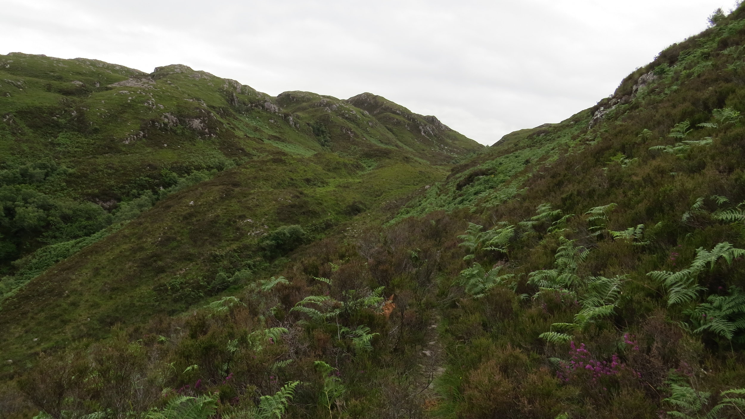 Narrow Winding Path to the Top