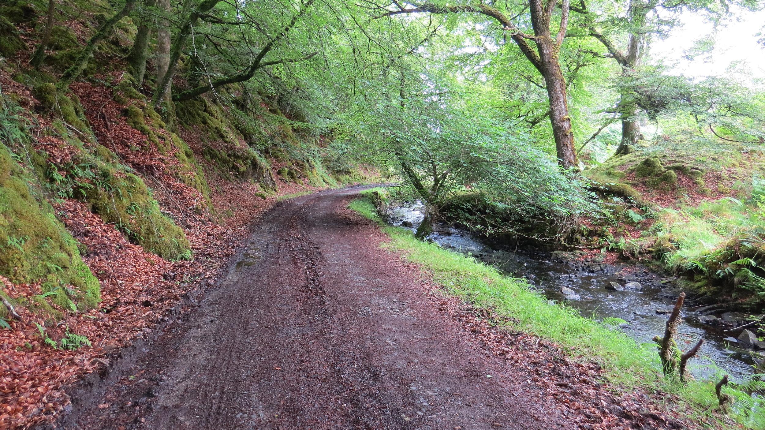 Nice Farmers/Woodland Track