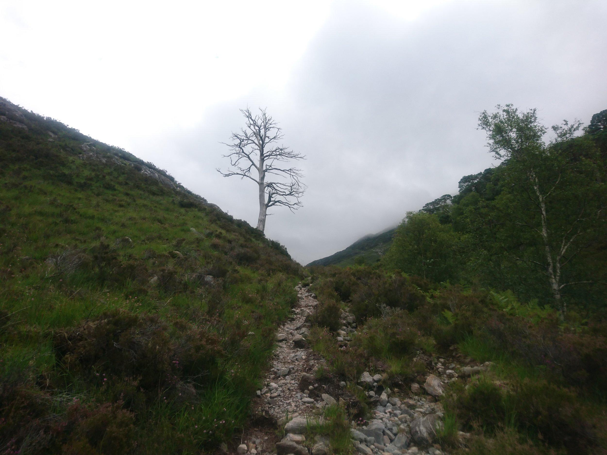 Dead Tree by Path