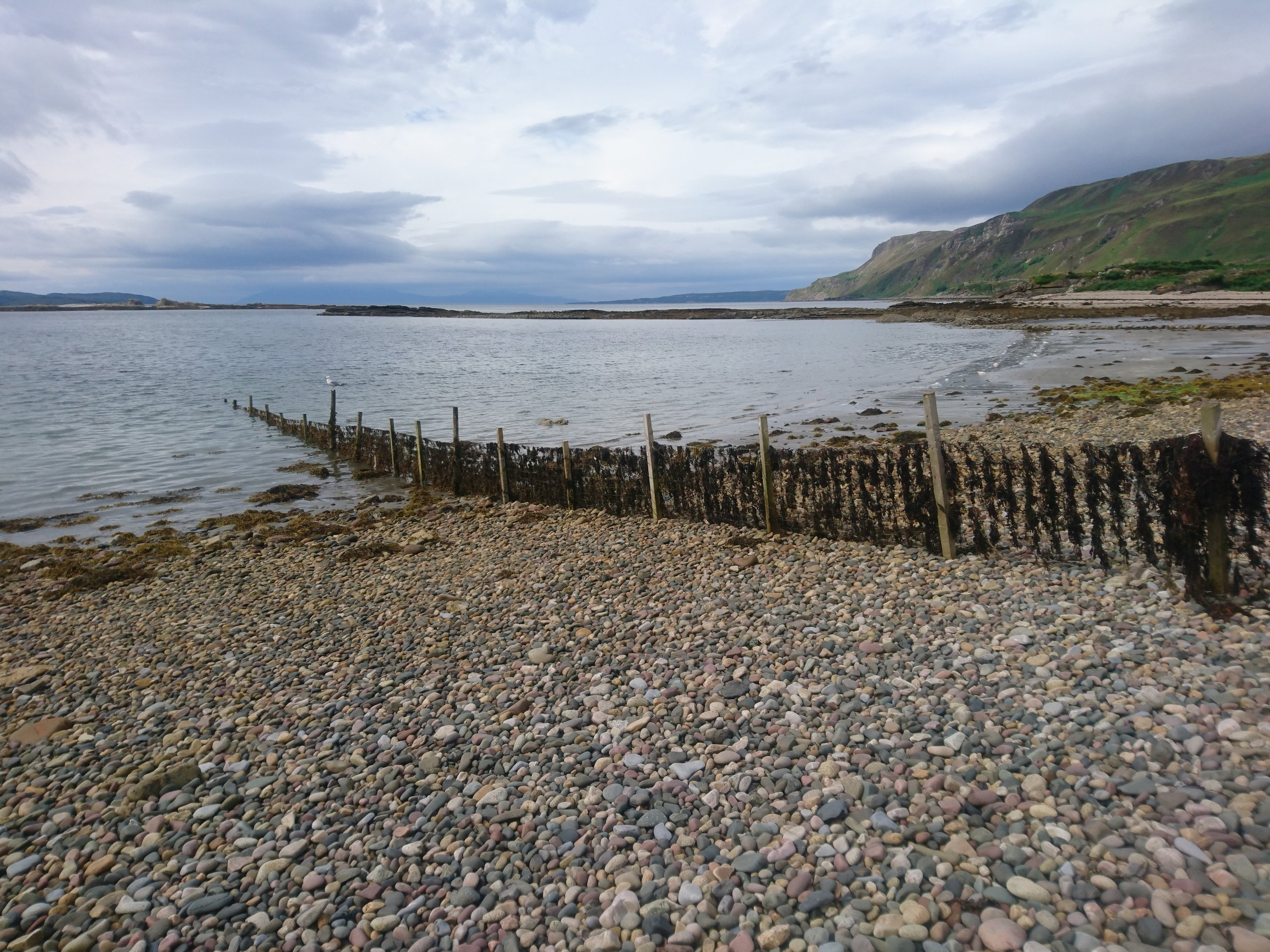 Seaweed covered Fence