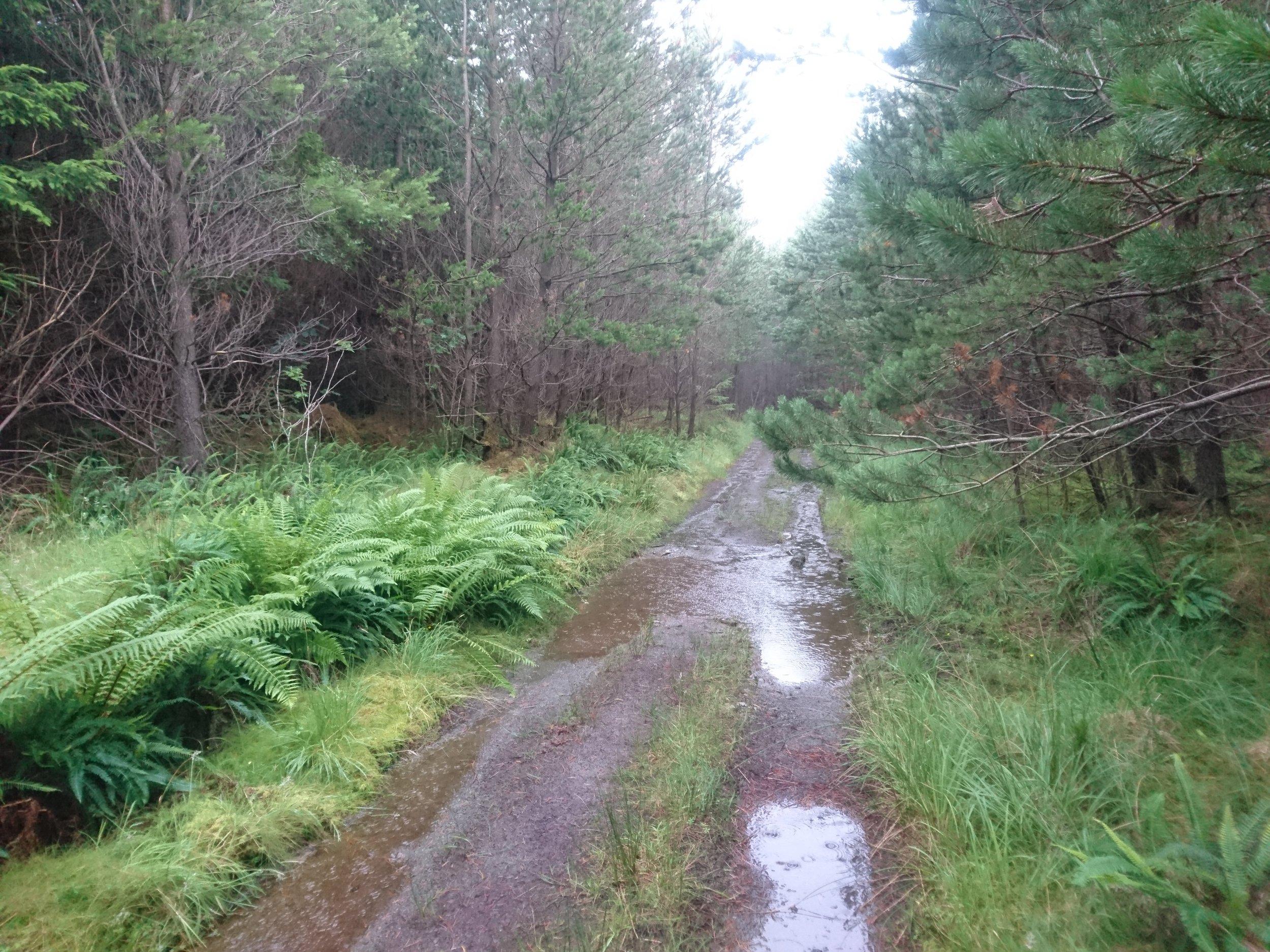 Damp Woodland Walking