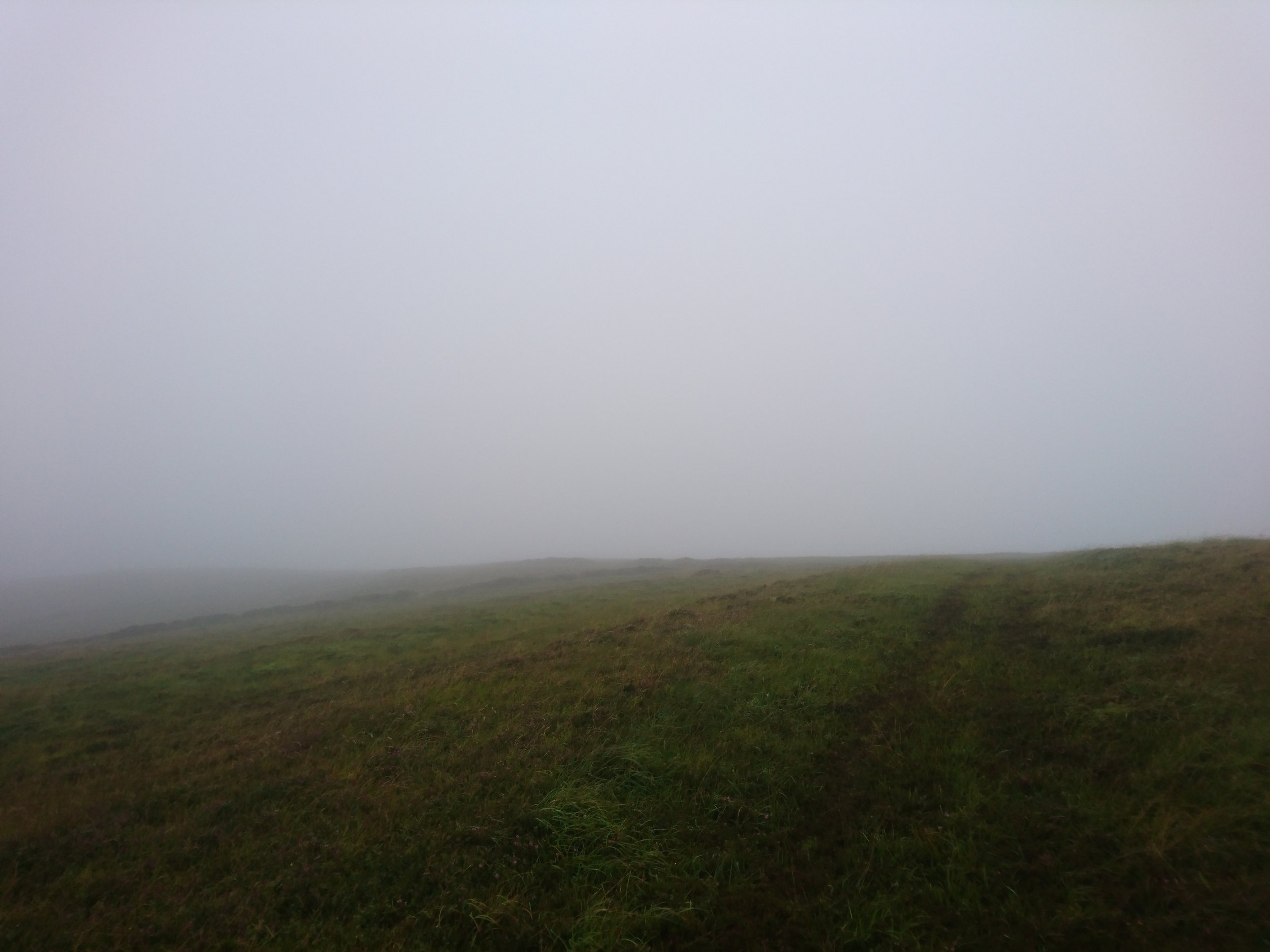 Fog and Grass
