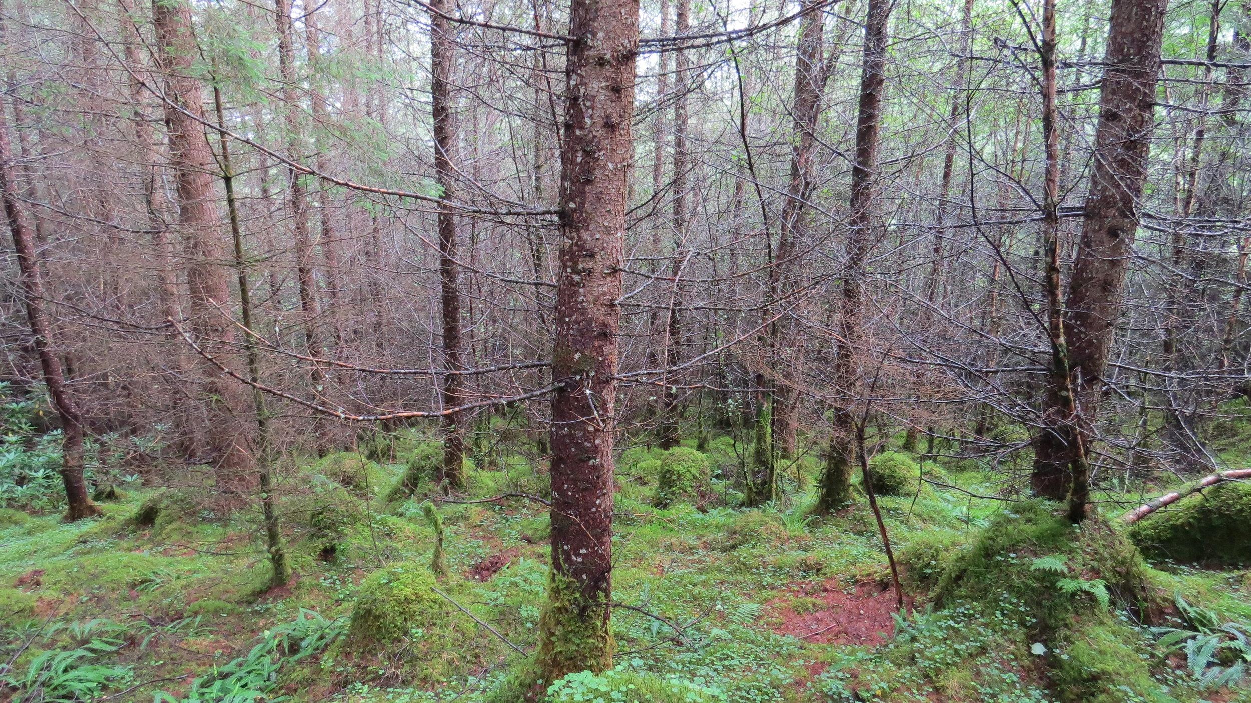 Descending though Pines (Easy Part)